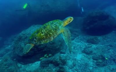 Panamá – Turismo verde MARES