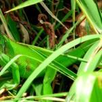 Panama : Le mythe du canal et l'écotourisme