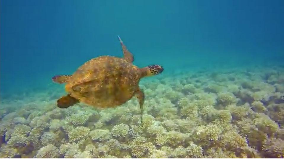 World Heritage Youth Project on Marine Biodiversity & Climate Change, Panama