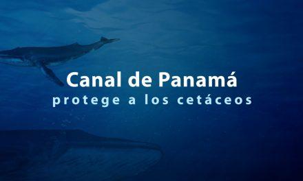 Le canal de Panama protège sa faune marine