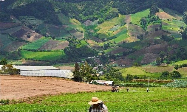 Cerro Punta, Chiriquí! Las tierras altas y la agricultura en Panamá!